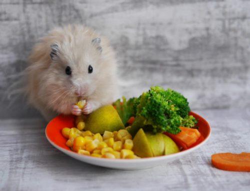 Stop met hamsteren, blijf weg bij junkfood en eet veel groenten!!!